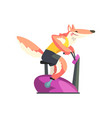 red fox exercising on stationary bike wearing vector image