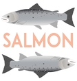 Salmon isolated on white vector image vector image
