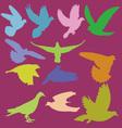 pigeon 2 vector image