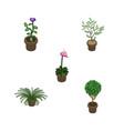 isometric houseplant set of flower grower plant vector image vector image