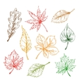 Leaves sketches set Hand drawn vector image