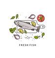 Rainbow trout Fresh fish vector image