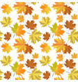 seamless pattern with maple leaves on white backg vector image vector image