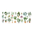set trendy potted plants for home different vector image vector image