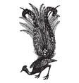 lyre bird vintage vector image vector image