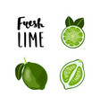 bright flat style lime fruit with lettering vector image vector image