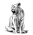 lioness vector image