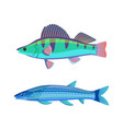 mackerel blue fish marine set vector image