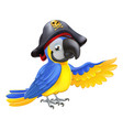 pirate parrot vector image vector image