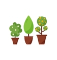 Set of decorative plants in pots vector image vector image