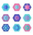 Collection of different snowflakes vector image