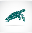 sea turtle isolated on white background animal vector image