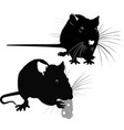 animal rat vector image