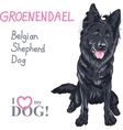 dog Belgian Shepherd Dog Groenendael breed vector image vector image