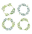 eucalyptus branches wreaths with watercolor style vector image