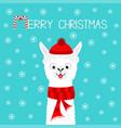 merry christmas alpaca llama baface neck santa vector image