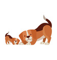 beagle dogs pet on white background vector image vector image