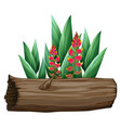 bird paradise and wooden log on white vector image vector image