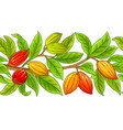 cocoa branches pattern on white background vector image