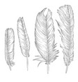 drawing feathers vector image vector image