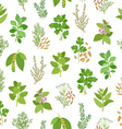Herbs and spices seamless pattern vector image vector image