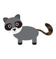 isolated cute raccoon vector image vector image