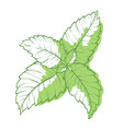 mint icon fragrant melissa green herbal symbol vector image vector image