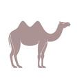 Camel vector image