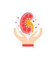 kidney care concept vector image