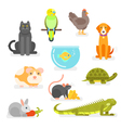 set of various home pets vector image vector image
