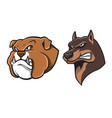 bulldog and german shepherd head mascot vector image vector image