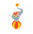 circus elephant stands on a big ball vector image