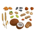 Nuts grain and kernels sketch icons vector image