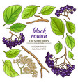 black rowan elements set vector image