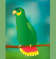 bright parrot in cartoon style on a simple vector image