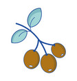 coffee plant with leaves and grains vector image vector image