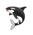 Grampus or orca jumping killer whale vector image vector image