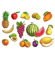 Hand drawn sketch of tropical and exotic fruits vector image