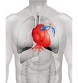 Human heart diagram in detail vector image vector image