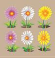 summer spring flower collection set vector image