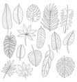 leaves tropical plants black outline set vector image vector image