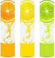 Banners with Fresh Citrus Fruit vector image vector image