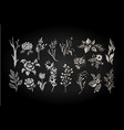 floral set graphic collection with white leaves vector image vector image