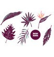 set of tropical leaves agave monstera etc vector image