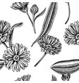 seamless pattern with black and white calendula vector image vector image