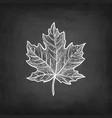 chalk sketch maple leaf vector image vector image