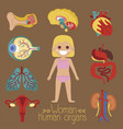 female health poster with human organs vector image