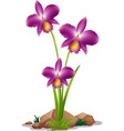 purple orchid flowers on white background vector image vector image