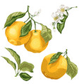 set with citrus orange fruit tree plant parts vector image
