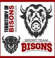 buffalo head animal symbol great for badge label vector image